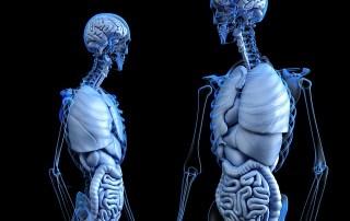 Anatomical 2261006 640