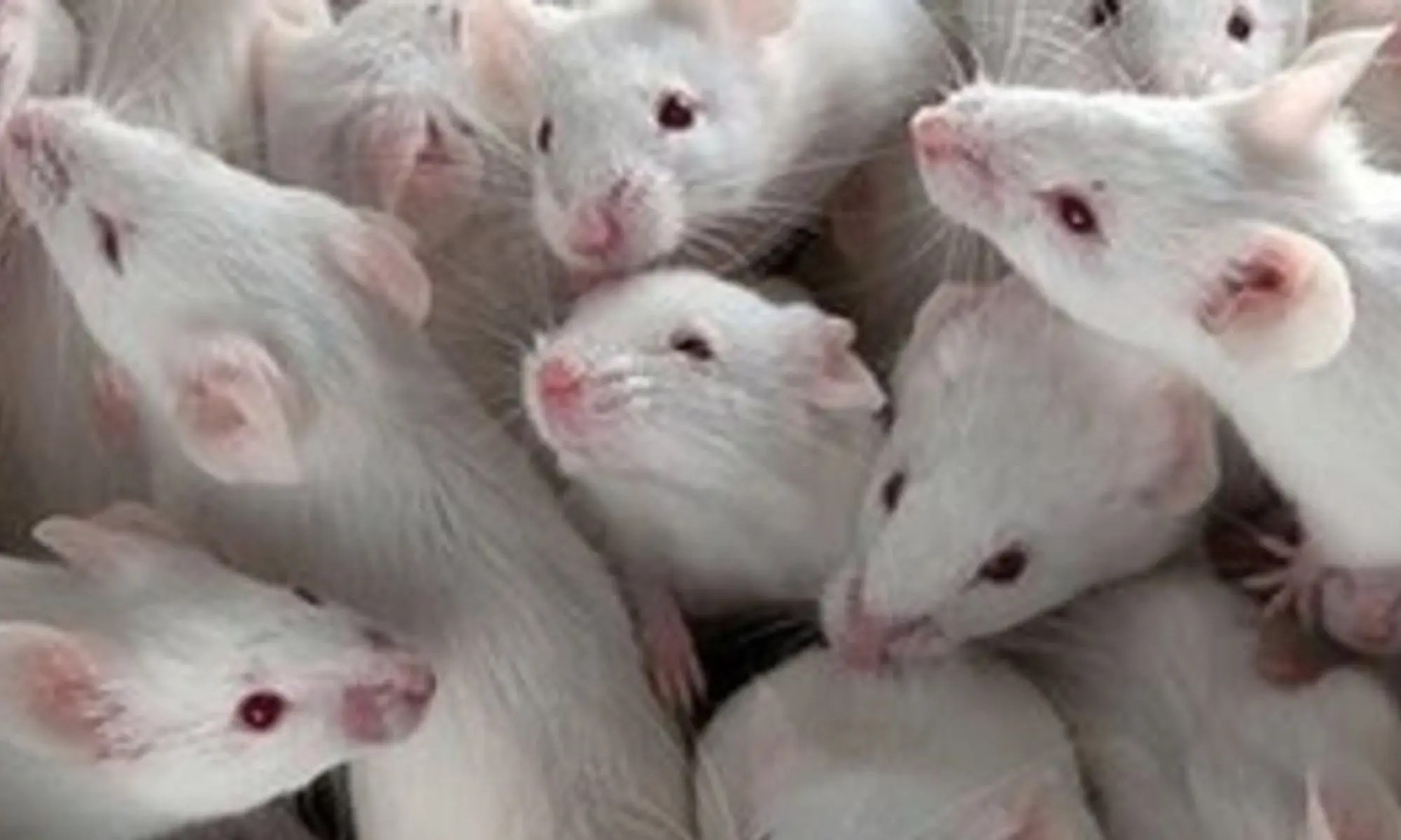 Transplacental effects of diethylstilbestrol in mice