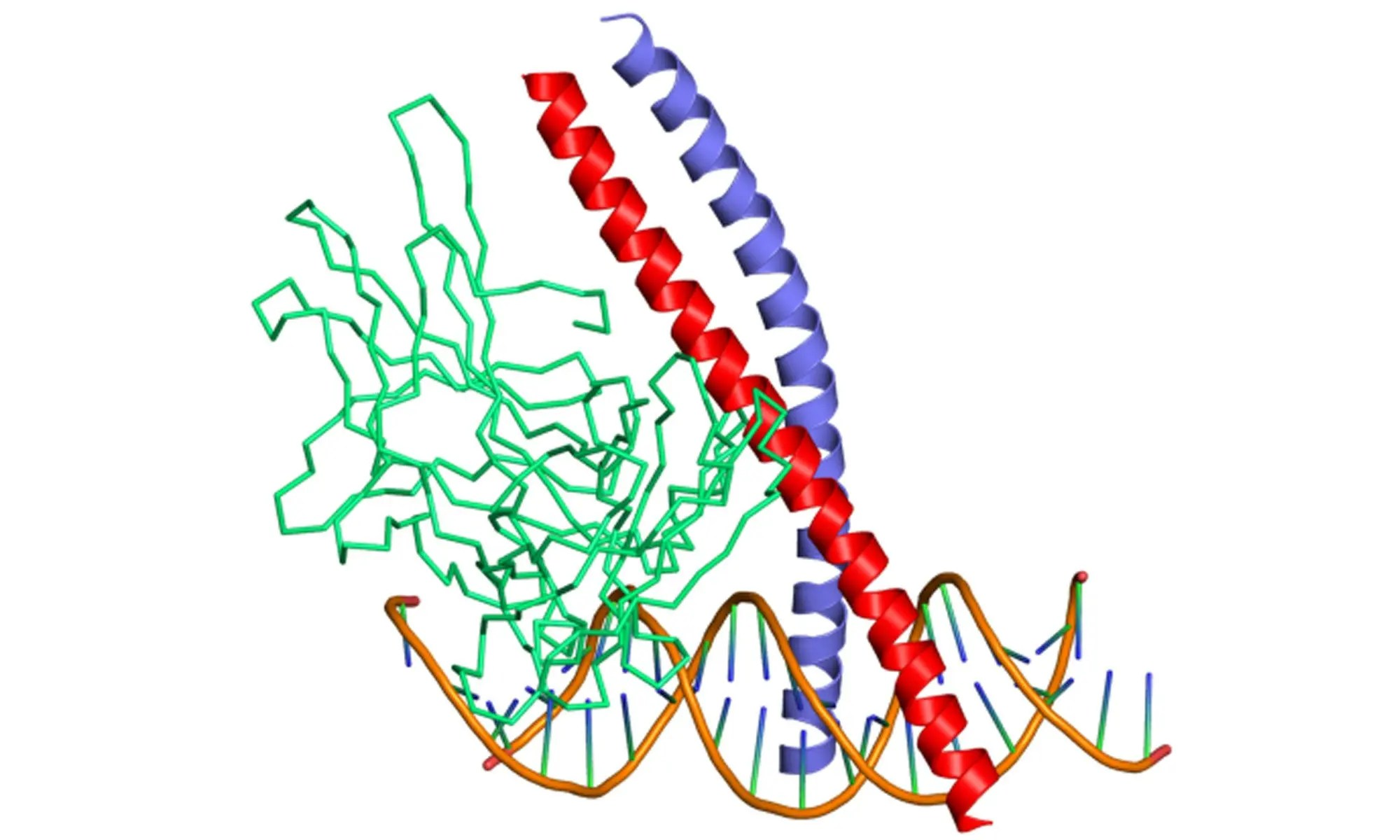 image of c-fos c-jun protooncogenes