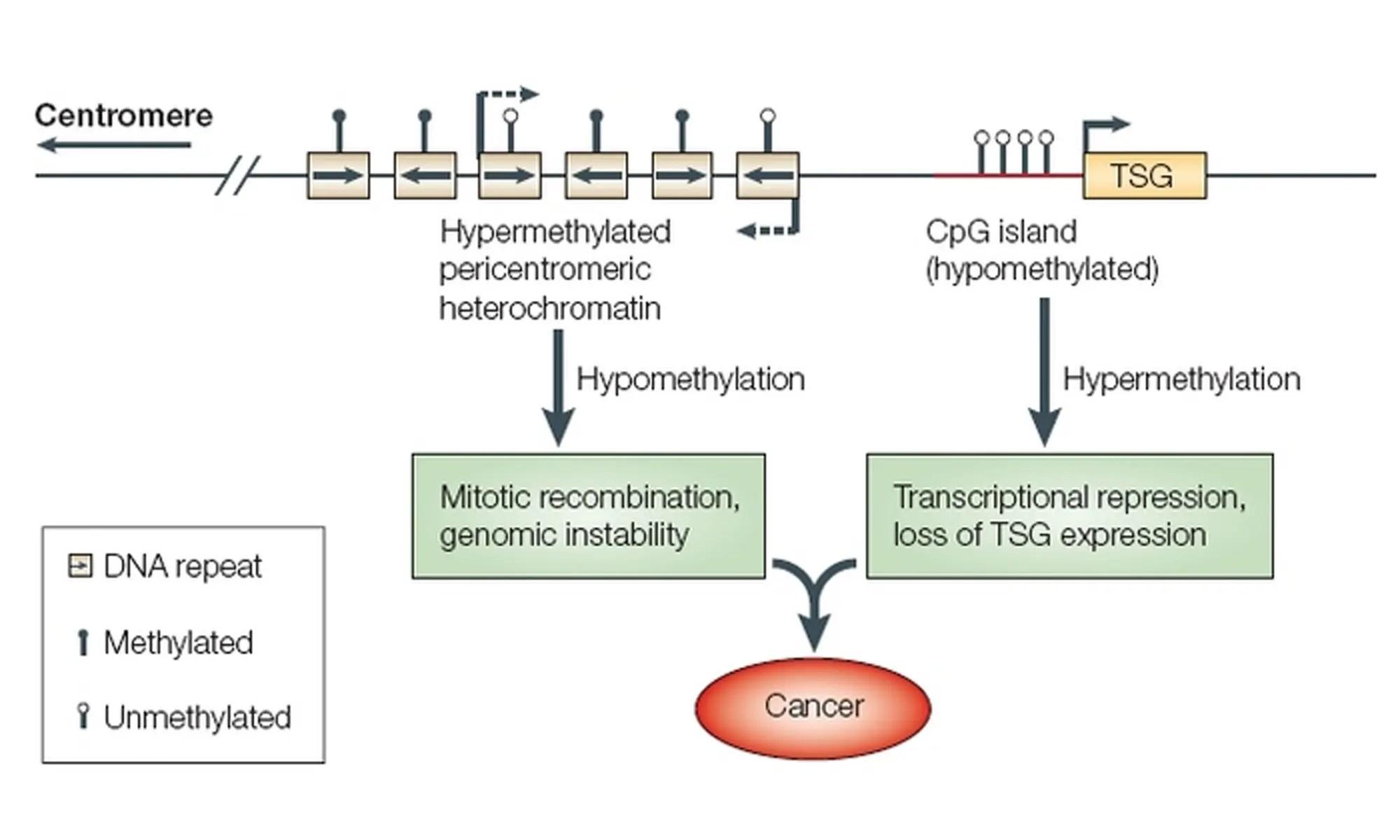 image of DNA-Hypomethylation