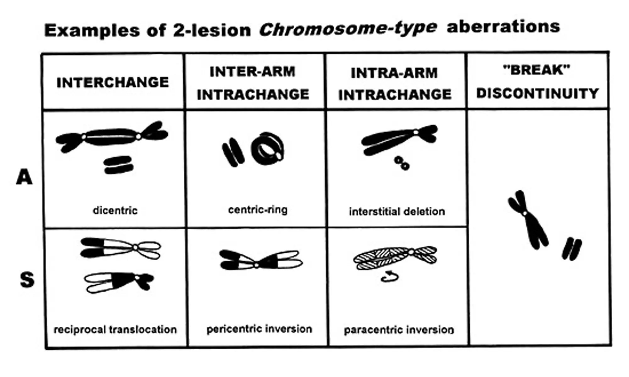 DES induces structural chromosome aberrations