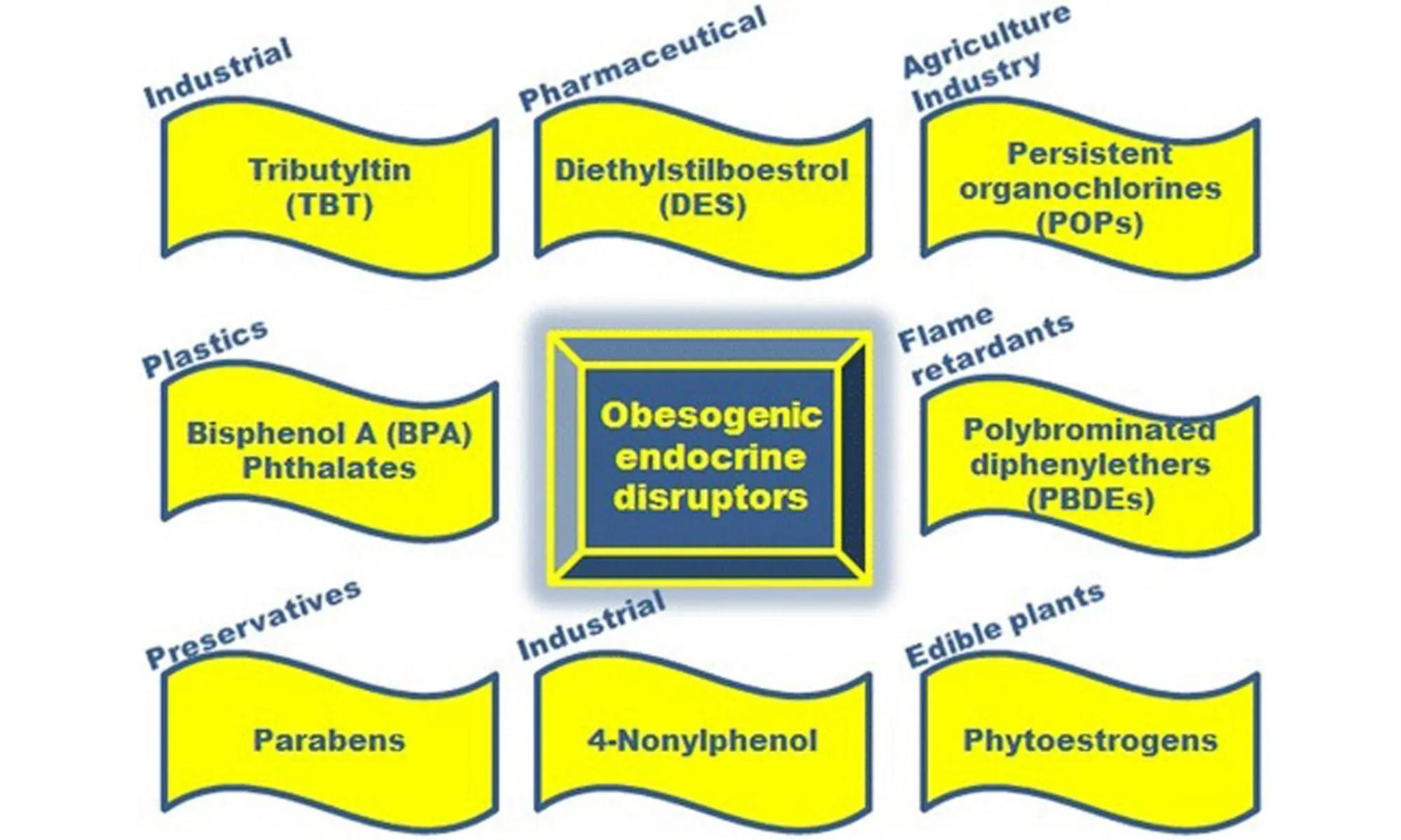 Endocrine Disruptors and Obesity