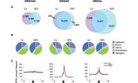 How DES exposure affects the neonatal uterine epigenome