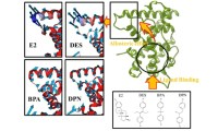 The Effect of Structural Diversity on Ligand Specificity and Resulting Signaling Differences of Estrogen Receptor α