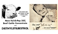 The case of diethylstilbestrol treated veal contained in homogenized baby-foods in Italy