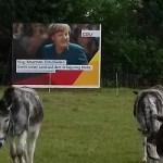 Wahlpropaganda für »Doof-Wähler»