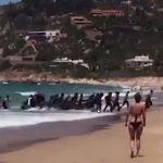 Über 11.000 kamen allein im Oktober über das Mittelmeer! Jetzt ermitteln sogar die Geheimdienste gegen Spanien