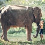 """Ist es an der Zeit, alle Elefanten zu essen?  Vom Unsinn der Ökobilanz """"Tier"""""""
