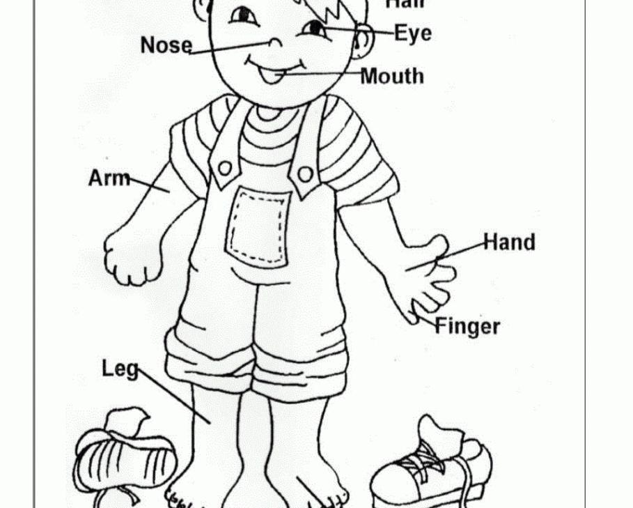 Identify Body Parts Preschool Worksheets
