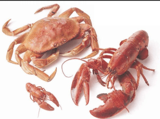 Difference between Lobster and Crab