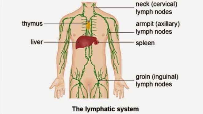What is Difference between Hodgkin's and non Hodgkin's Lymphoma