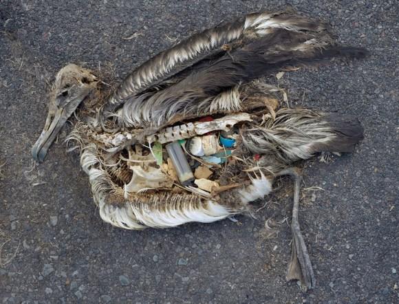 Dead bird and plastic art