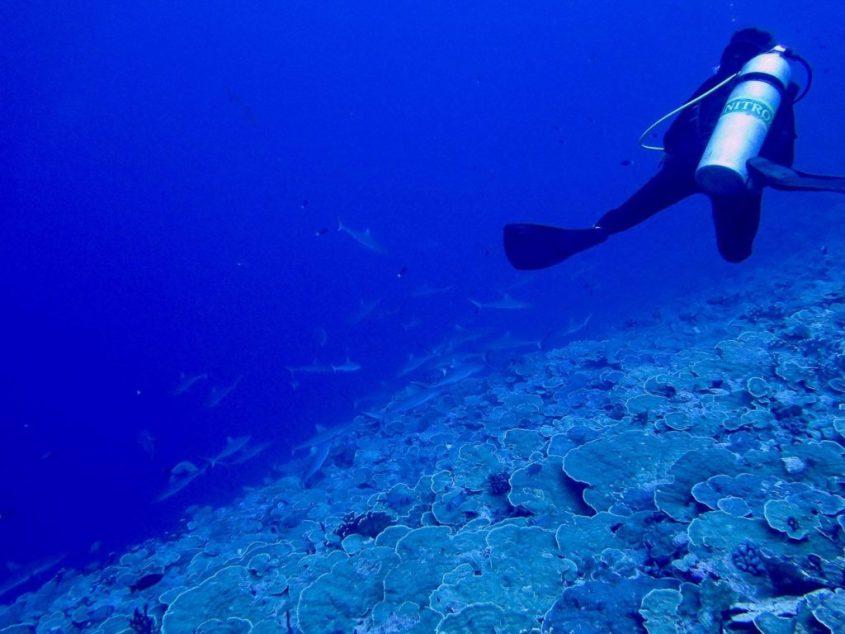 L'entrée du mur de requins de Fakarava en Polynésie française.