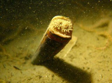 Couteaux ouverts sous lors en plonger en Zélande