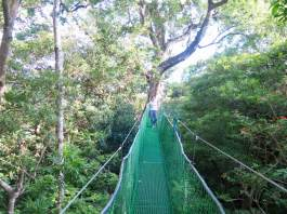 Un pont de singe tendu entre deux arbres au Costa Rica.