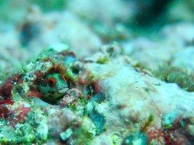Minuscule poisson dans les roches
