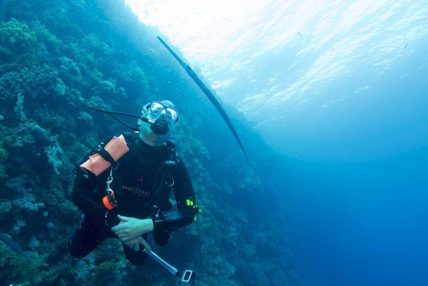 Un plongeur regarde passer un poisson-trompette