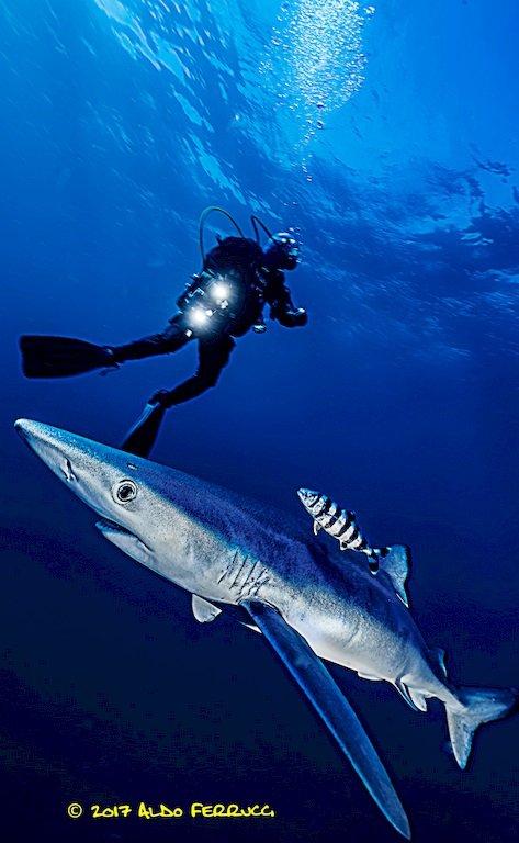Aldo Ferrucci plonge avec un requin