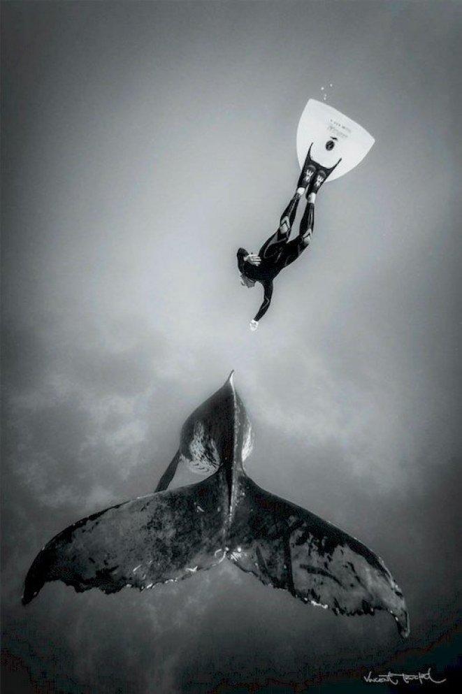 Un apnéiste rejoint une baleine