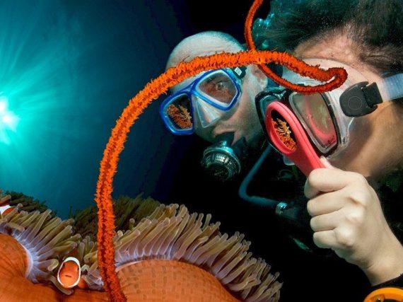 Deux plongeurs munis d'une loupe observe un poisson clown