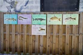 6 panneaux indicants les poissons que l'on peut voir dans la carrière