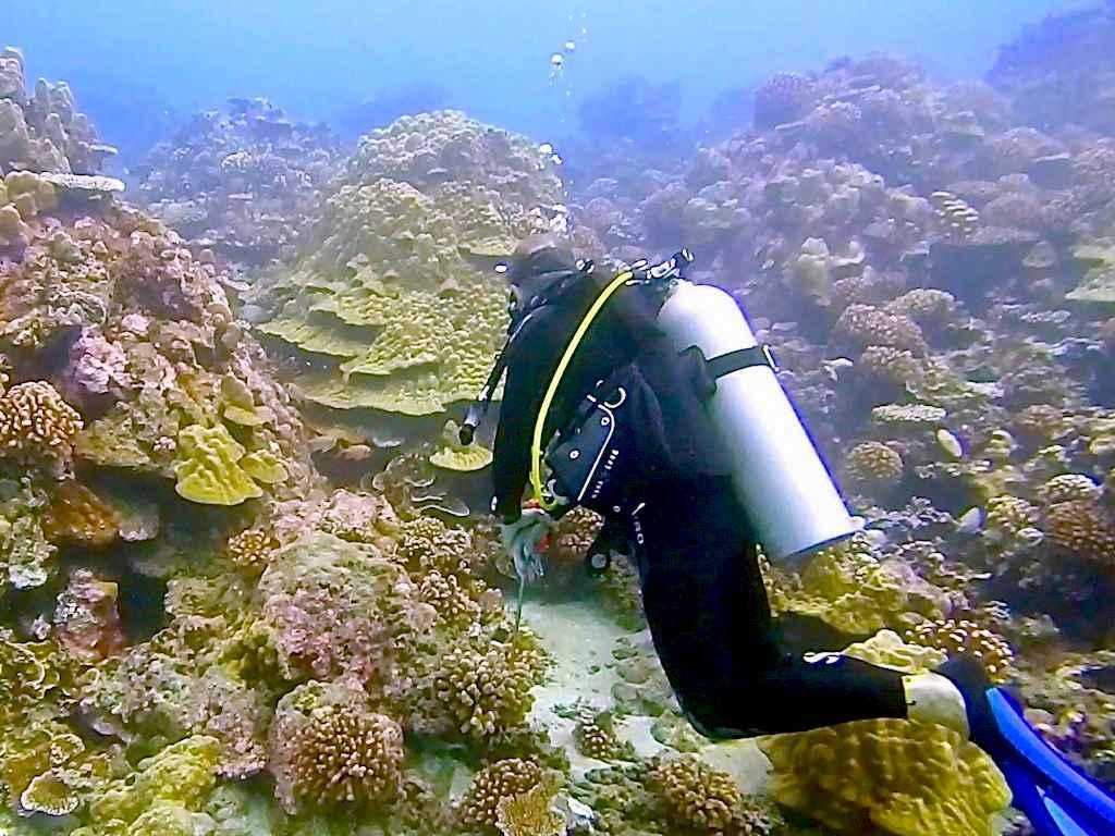 Un plongeur en formation de biomimétisme devant des coraux
