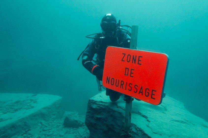 Un plongeur au début de la zone de nourrissage
