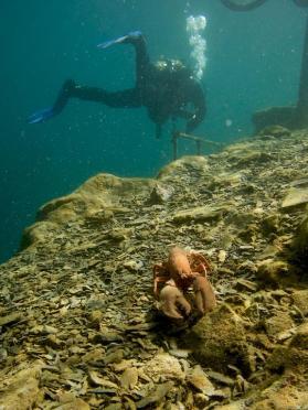 Un homard en plastique sous l'eau