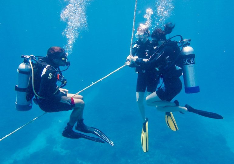 Intelligence collective : l'incroyable impact en plongée