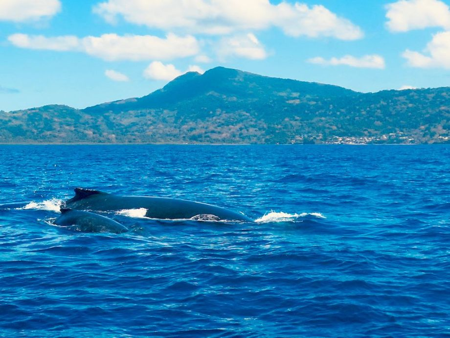 Une baleine et son baleineau viennent nous saluer lorsque nous partons plonger à Mayotte