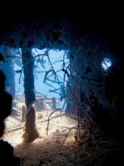 Des algues et jeu de lumière dans l'épave du SS Kathryn