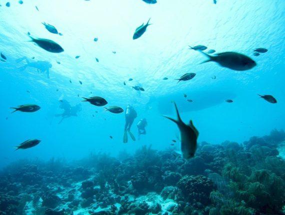 Les sons des océans peuvent avoir de multiples origines comme les bateaux, les animaux marins ou encore les plongeurs.