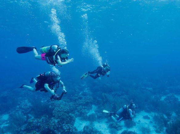 Une palanquée de plongeurs évoluant dans les eaux claires de Bonaire