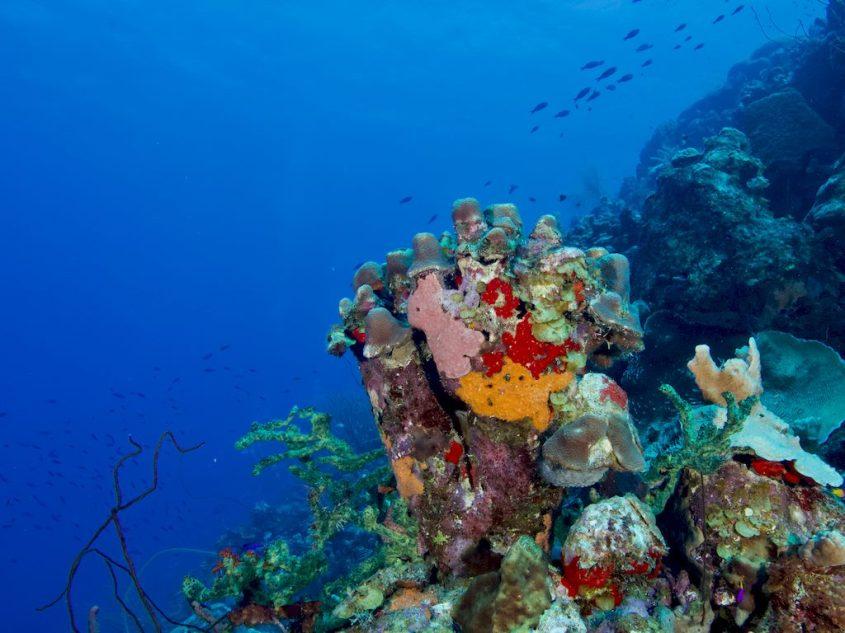 Un fond sous-marin coloré à Bonaire.