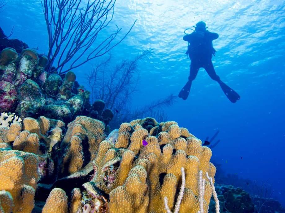 Un nouvel algorithme de décompression en plongée permettra à ce plongeur de personnaliser ses paramètres.