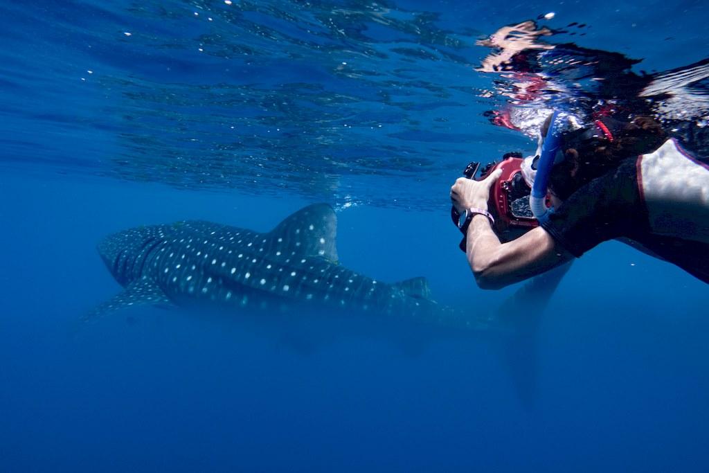 Stéphanie Floirat photographiant un requin-baleine à Madagascar.