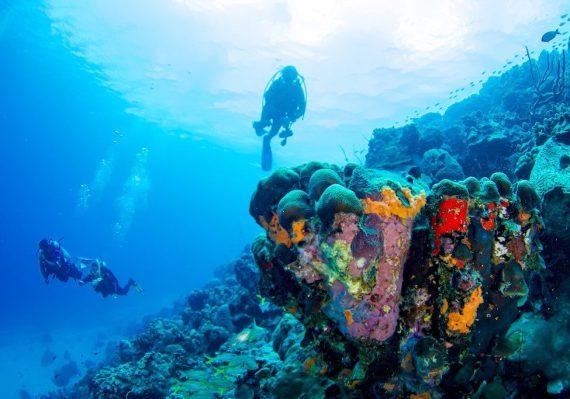 Plonger à Bonaire 2020 : découvertes de nouveaux spots comme ces plongeurs.