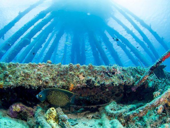 Un poisson ange en dessous des impressionnantes structures de Salt Pier