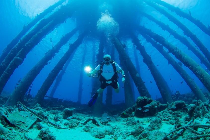Un plongeur avec un t-shirt Different Dive est occupé à plonger au Salt Pier à Bonaire