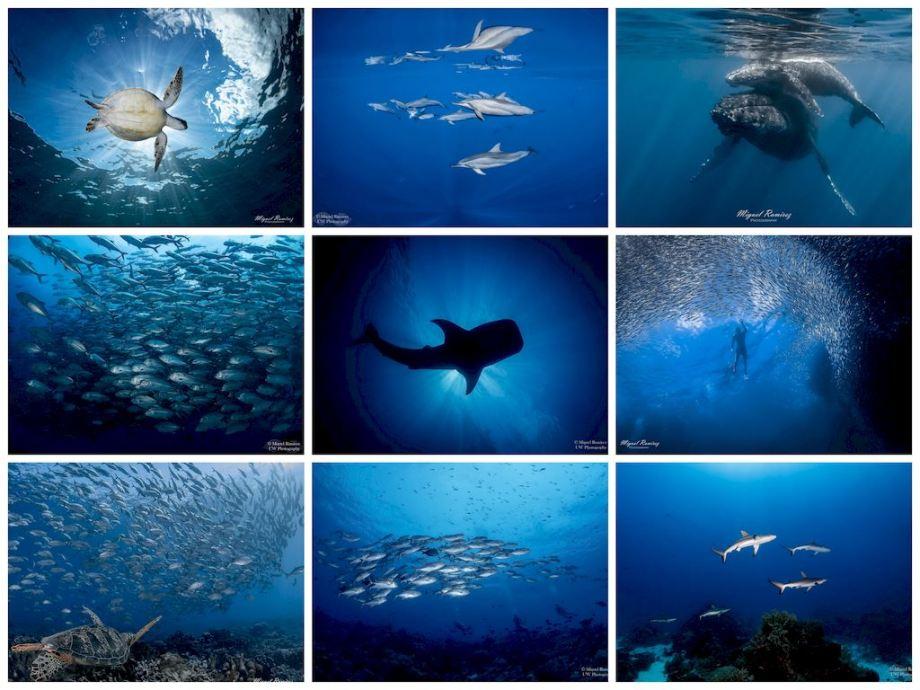 Mix de photos grand angle réalisées par Miguel Ramirez.