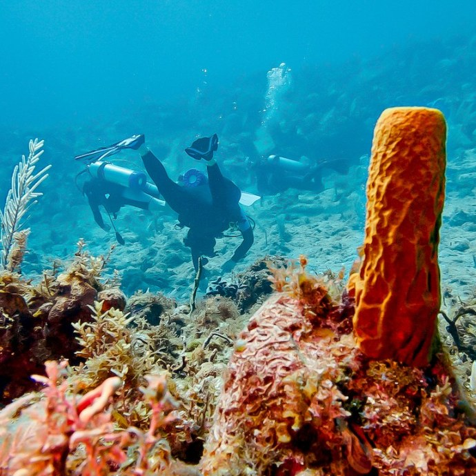 Des personnes faisant de la plongée en Jamaïque.