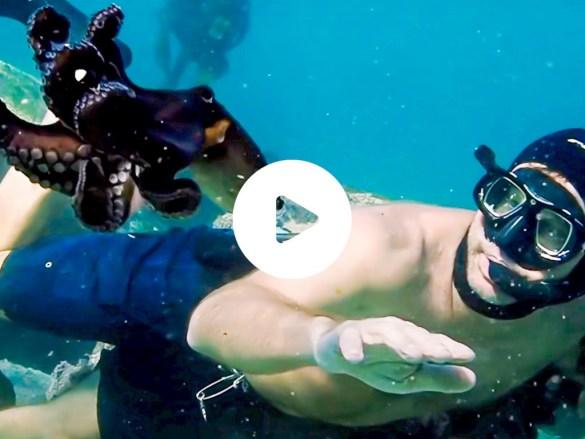 Craig dans le tournage de My octopus teacher ou la sagesse de la pieuvre.