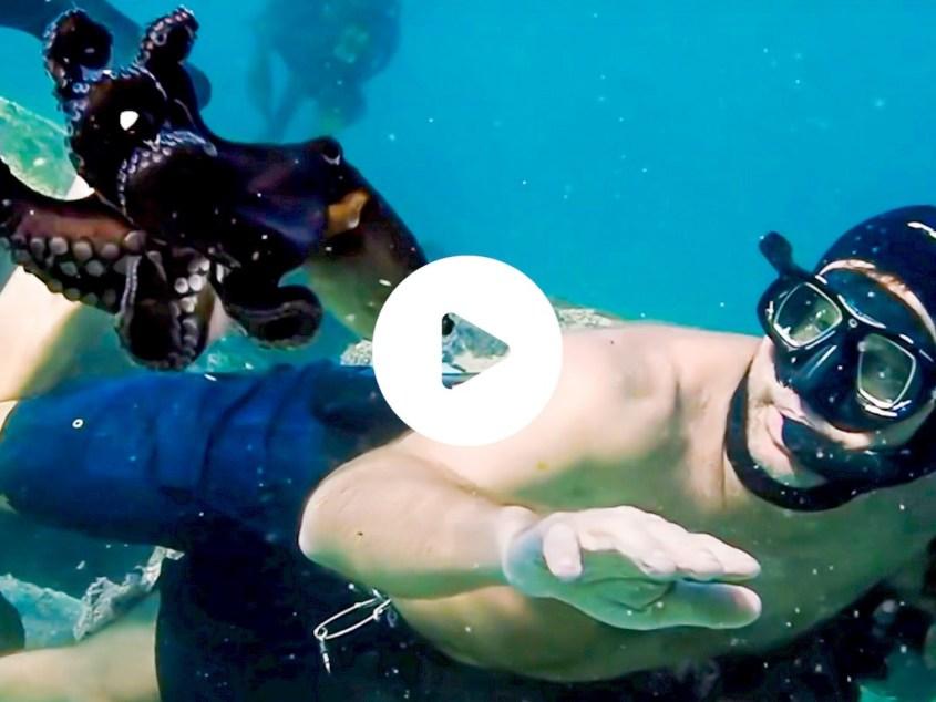 Bluffant : le film qui remet en question notre approche du monde sous-marin