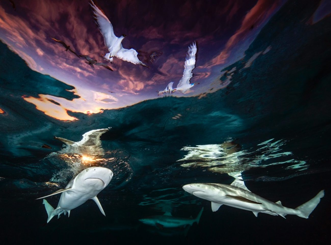 La photo avec laquelle Renee Capozzola a remporté le concours des plus belles photos sous-marines 2021