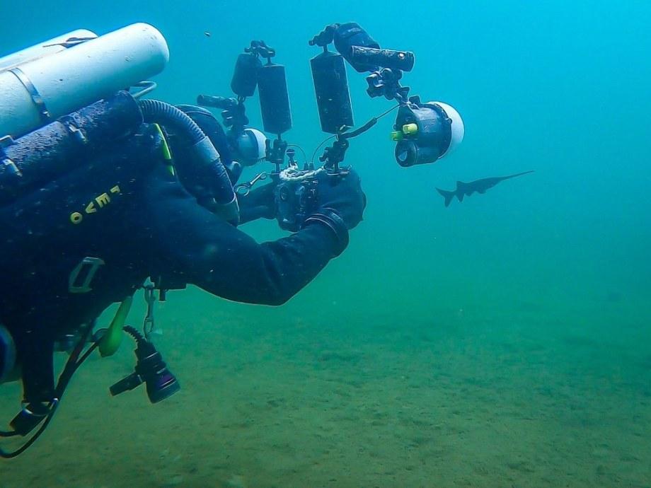 Un photographe sous-marin photographie un polyodon à la carrière de Rochefontaine