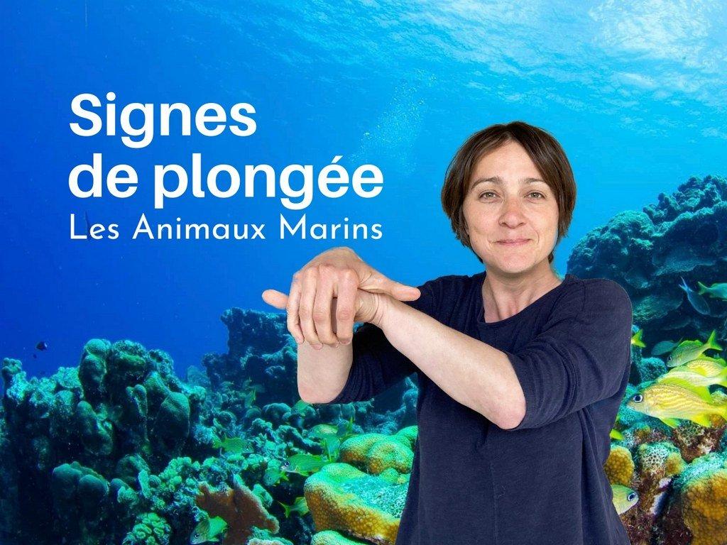 Les signes de plongée pour les animaux marins.