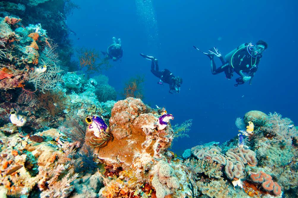 Des plongeurs évoluent dans les eaux chaudes de Raja Ampat.