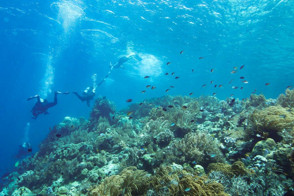 Plongeurs et snorkeleurs se rejoignent sous l'eau en Indonésie.
