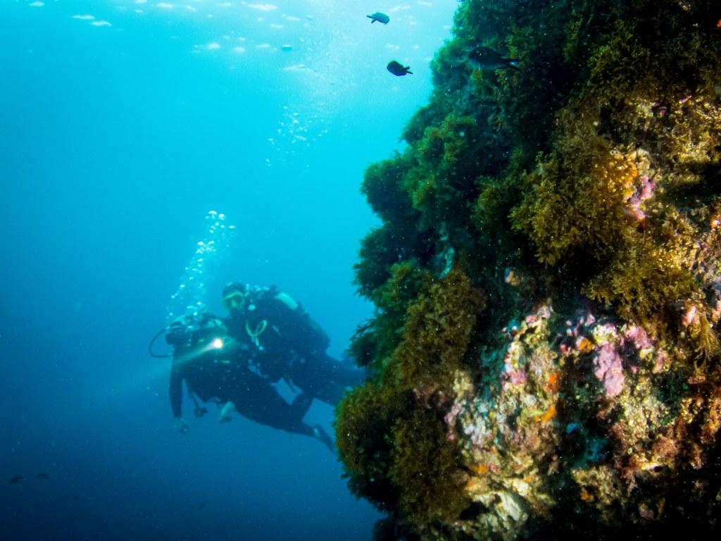 Les moniteurs de plongée emmènent les plongeurs sous l'eau.