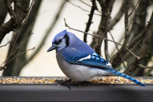 A Blue Jay, Hope, & Special Needs Parenting